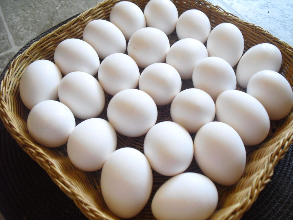 are eggs a dairy product