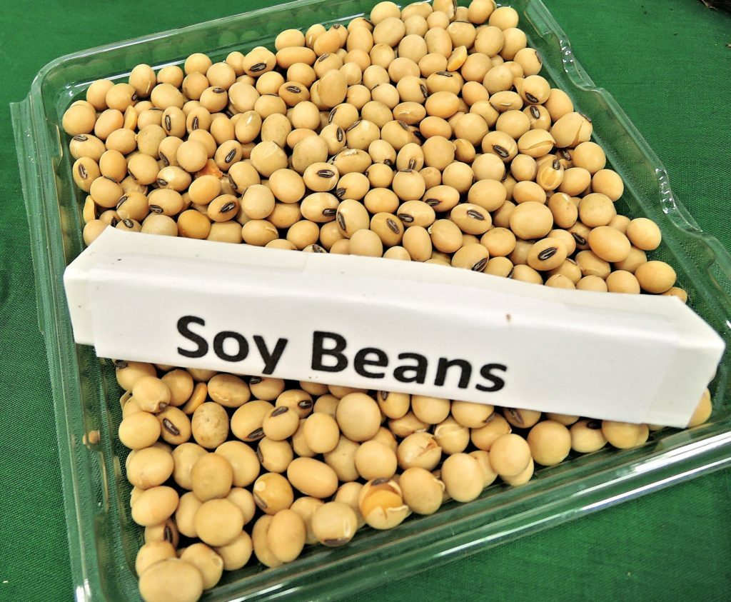 does soymilk have dairy